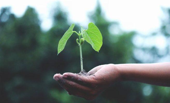 nachhaltieges unternehmen