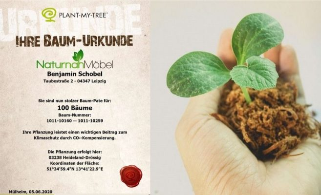 Bäume pflanzen für´s Klima