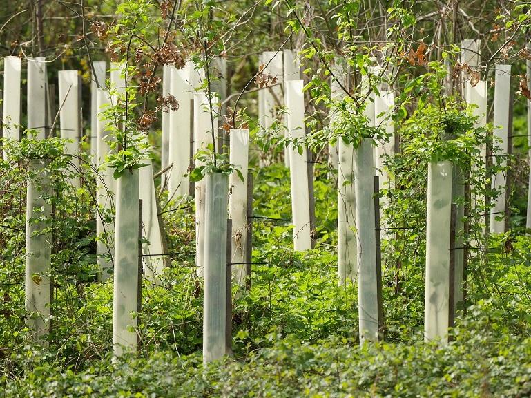 wir unterstützen Aufforstungsprojekte von PLANT-MY-TREE
