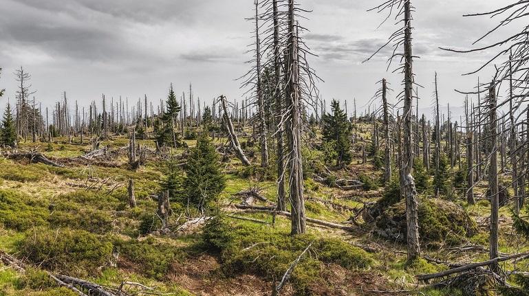 Bäume pflanzen für das Klima