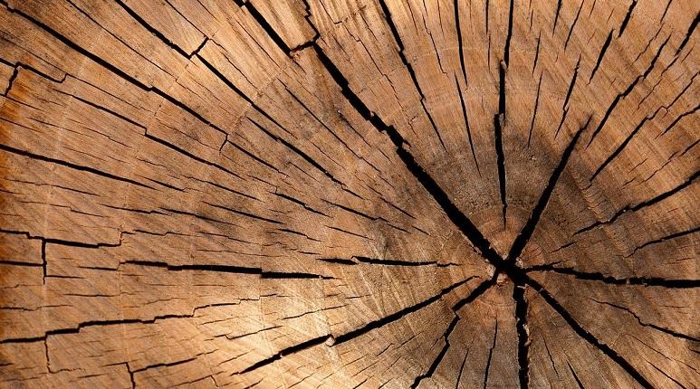Massivholzmöbel Ratgeber